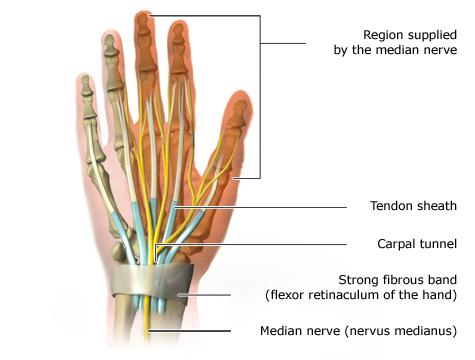 nervus ulnaris orthosis